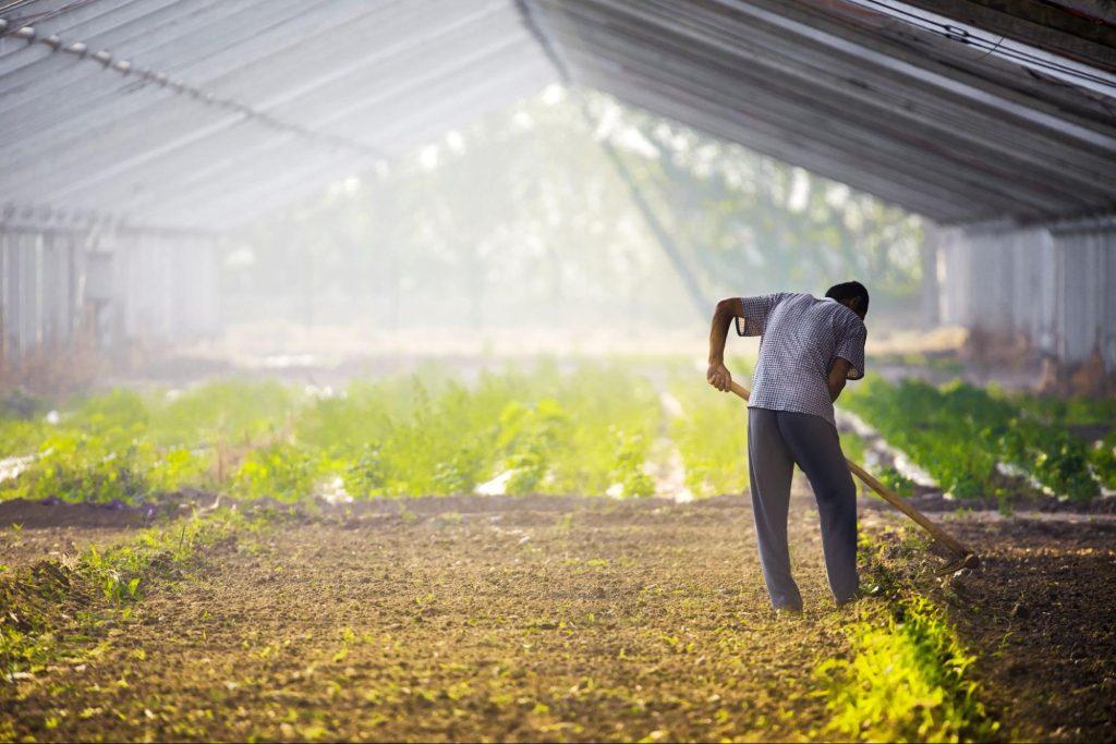 Man tensing plants in large greenhouse.